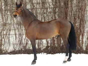 top sire2006-calvaro largeL