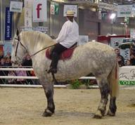 salon3-orne-percheron mediumL