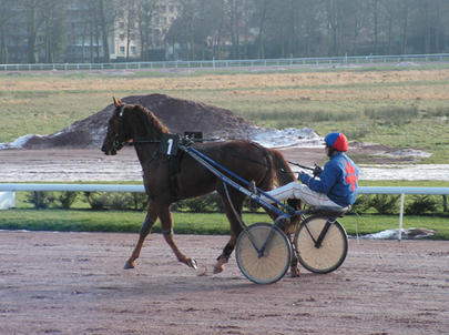qualif-trotteur largeL