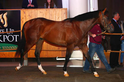 arqana breeze up 112 largeL