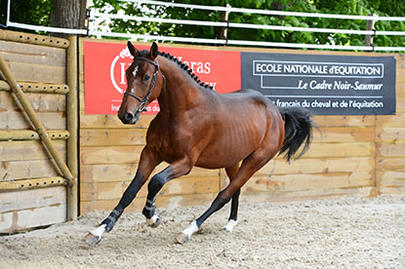 lamballe Bility de Couepeur (Quality Touch x Elf d'Or) largeL