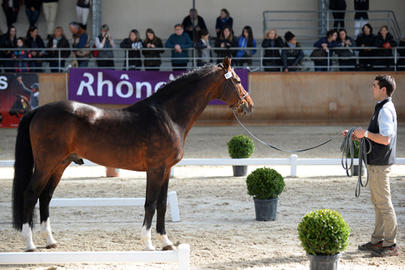 top sires 2014 Quintus largeL