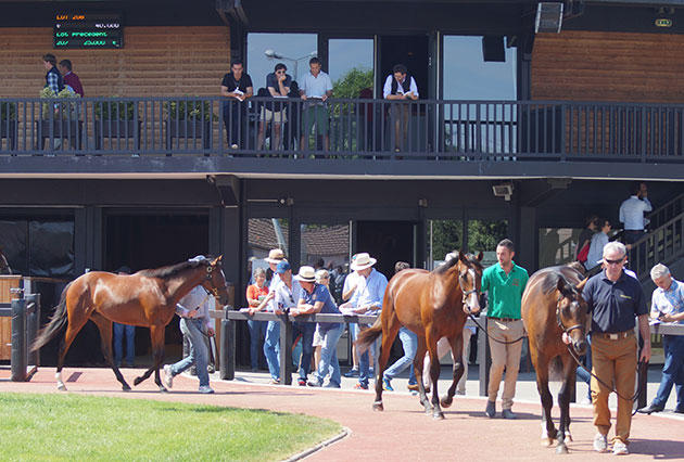 arqana 2016 verylargeL