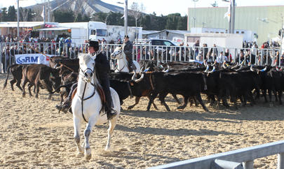 cheval passion 2015 tri de bétail largeL