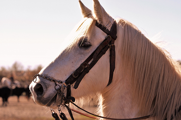 cheval passion camargue