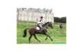 Cross haras du pin smallL
