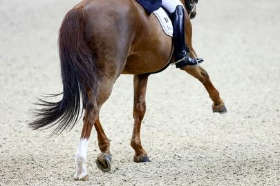 Dressage illustration largeL