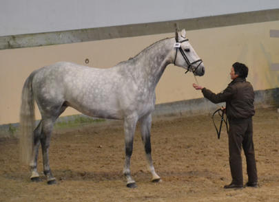 equigenetics 2015 Ulgar Mail largeL