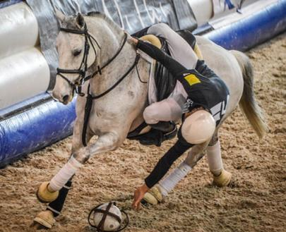 Horse Ball Pro Elite Elligton Barnes Chambly largeL