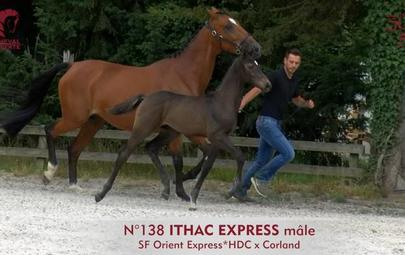 Ithac Express largeL