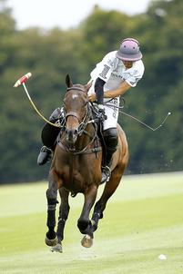 polo chantilly largeP
