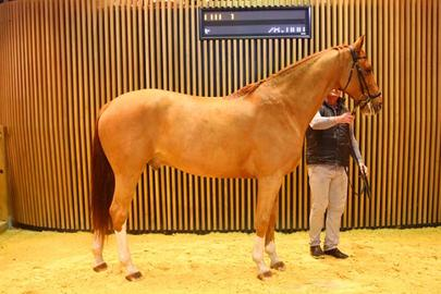 Rossini arqana largeL