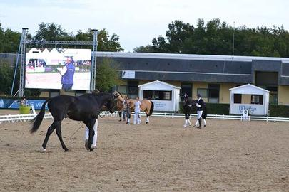 saumur france dressage largeL