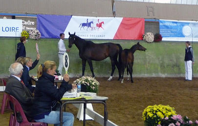 saumur gs 16 France dressage largeL