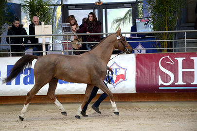 top sires 2017 Ogrion des Champs largeL