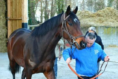 treve retour chantilly largeL