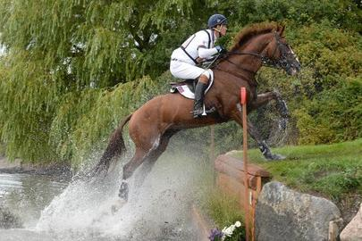 William Fox Pitt Chilli Morning largeL
